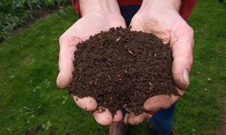 Kompostieren auf dem Balkon?