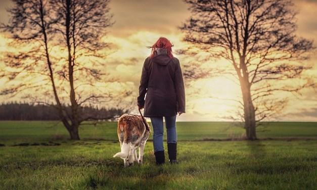Hund & Mensch – Gemeinsam stark durch bewegende Zeiten