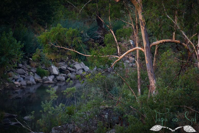 árvores no rio mondego