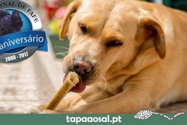 Exposição Canina Nacional de Fafe