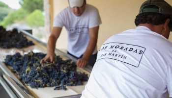 El Aula Vinos de Madrid, una iniciativa con Denominación de Origen