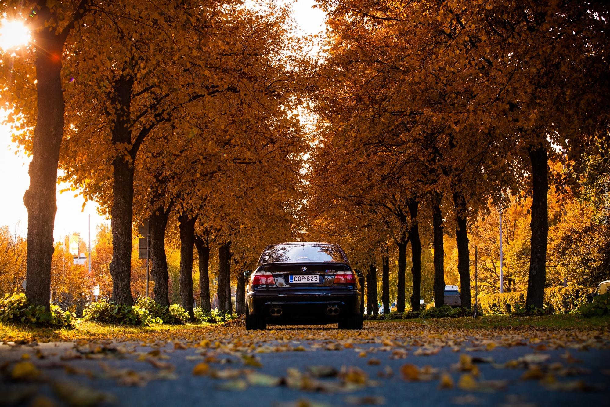 Jesie Droga Samochd BMW Drzewa
