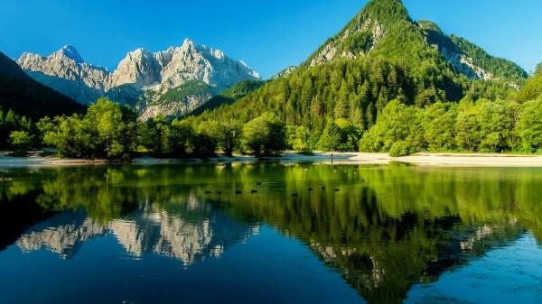 Jezioro, Góry, Drzewa, Kaczki