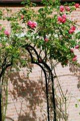 Auf der gegenüberliegenden Seite des Schlossgrabens stehen diese Rosenbogen.