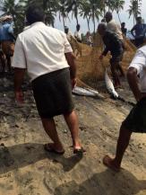 På stranden i Indien-003