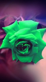 Light Green HD Flower Wallpapers for iPhone 7
