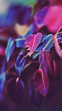 Leafs HD Flower Wallpaper for iPhone 7