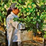 Rosa Gathers Grapes