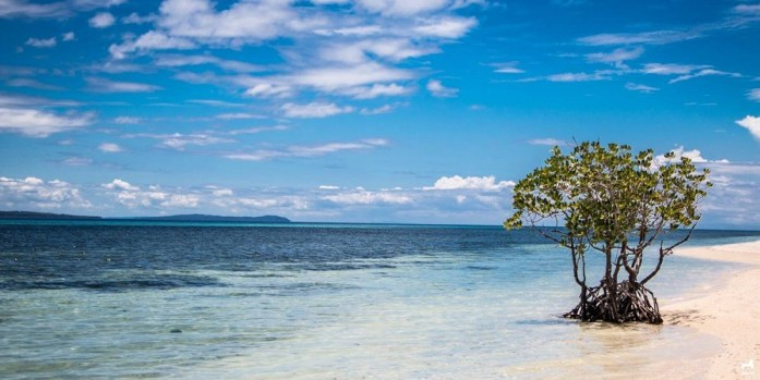 Mangrove in Alibijaban, Quezon