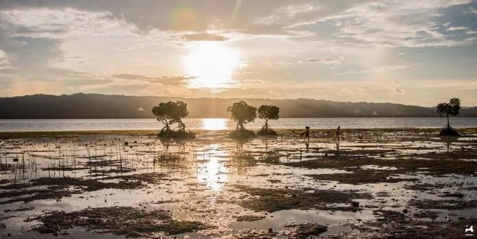 Sunset among mangroves in Alibijaban beach