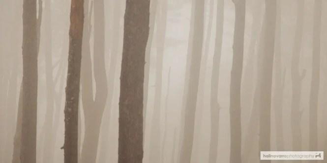 Trees in Kiltepan