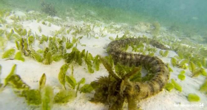 Sea anomone in Carabao Island