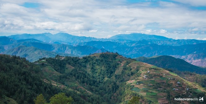 Rices terraces in Benguet