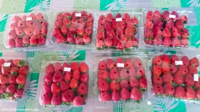 Strawberries for sale in Cameron Highlands, Malaysia
