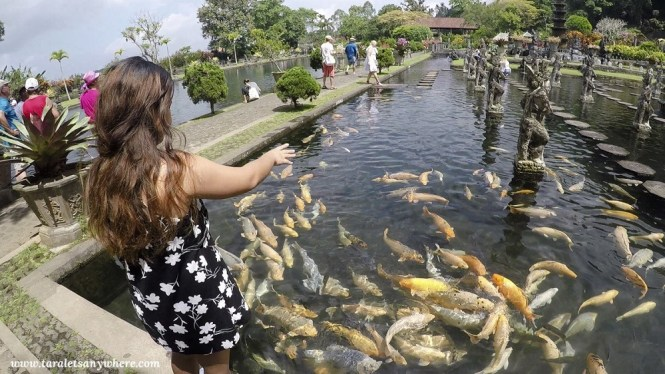 Fish feeding in Tirta Gangga, Bali