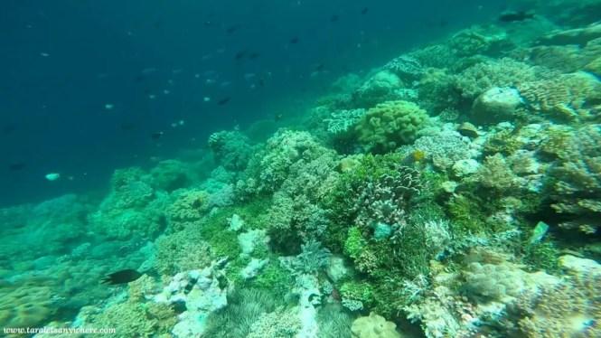 Snorkeling in Perhentian Islands, Malaysia