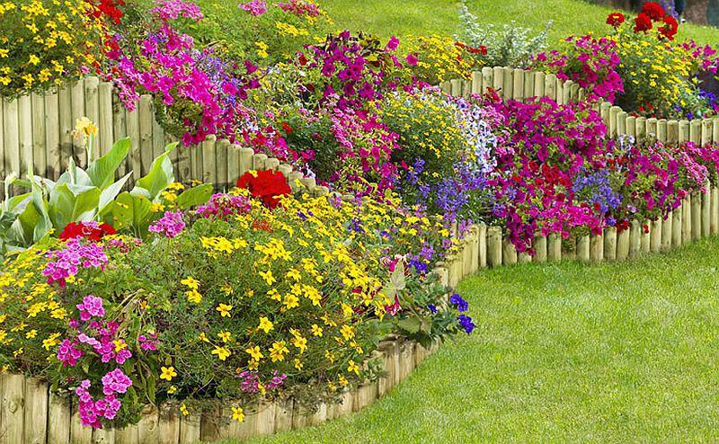 10 Flori Care Iți Colorează Grădina Toată Vara 10 Flori Care