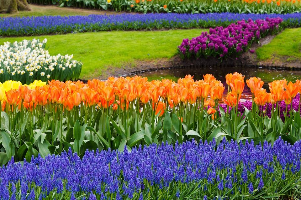 5 Flori Care Ne Fac Grădina Mai Frumoasă Primăvară