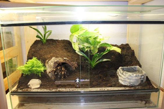 Tarantula Habitat 20 Awesome Tarantula Enclosures To