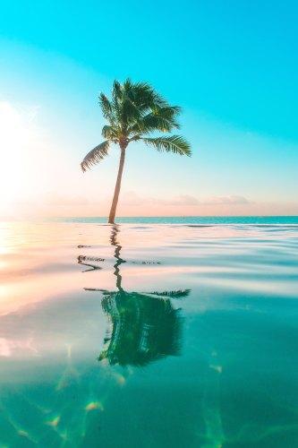 Single Palm Tree Ocean Water