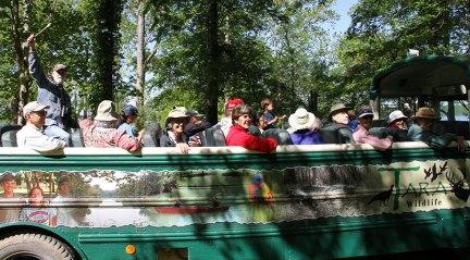 Open-air bus rides