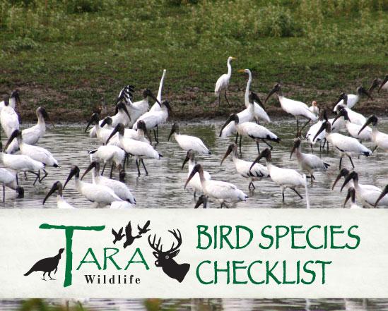 bird-species-checklist-page