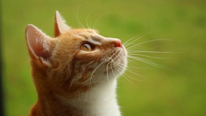 Tarbes, un chat enfermé dans un garage soulève une vague de solidarité