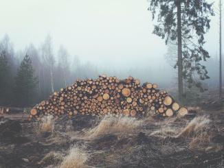 Granulés et produits dérivés du bois en forte croissance