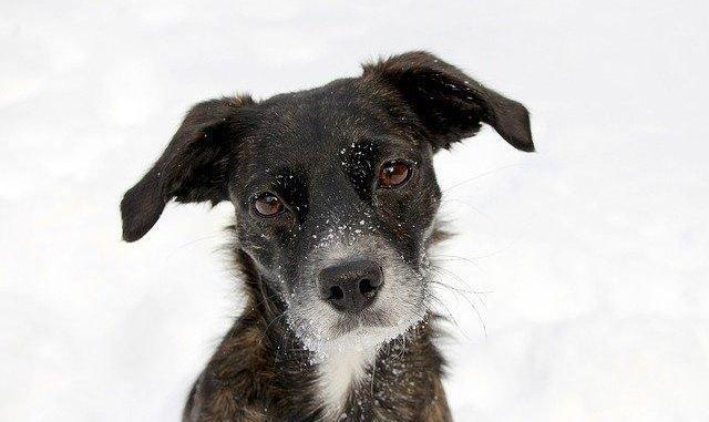 Tarbes. adopter un chat ou un chien à la SPA possible dès jeudi