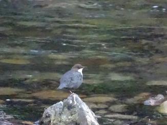 Séméac. une invitation à découvrir la nature avec 2 naturalistes
