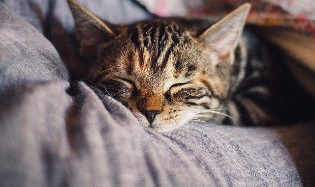 Un chat malade du Coronavirus découvert à Bordeaux