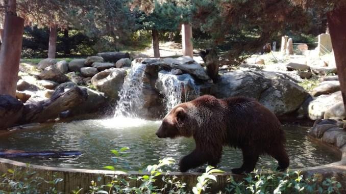 Ouverture partielle pour le Parc animalier d'Argelès Gazost
