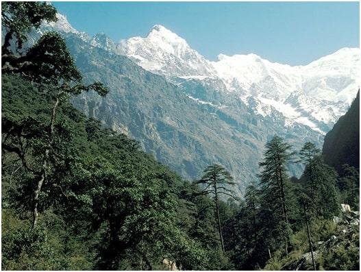हिमालय के पर्वतीय वन