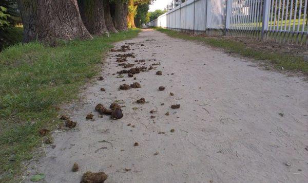 Droga wzdłuż Kanału Bródnowskiego nie jest usiana różami / fot. targowek.info