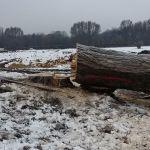 Drzewo na polu PGR odeszło do historii. Kto za tym głosował?