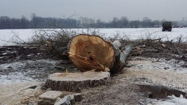 drzewopgr3