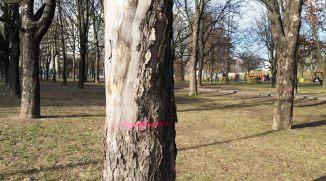bud-metr-wyszogrodzka-drzewa