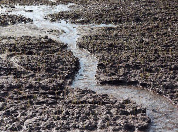 washout soil