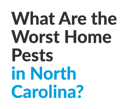 What Are the Worst Home Pests in North Carolina?