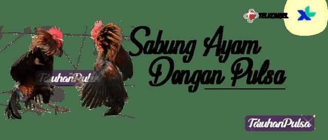 Bermain Sabung Ayam Menggunakan Pulsa