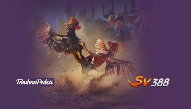 Arti-Meron,-BDD,-Dan-Wala-Di-Sabung-Ayam-Sv388