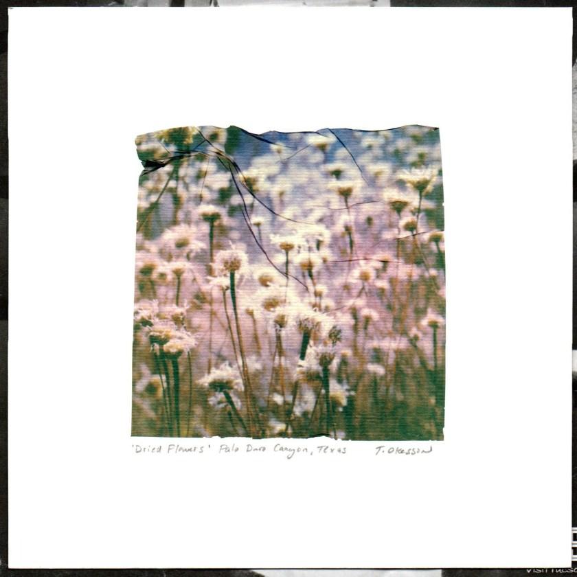 Dried Flowers, 2019.