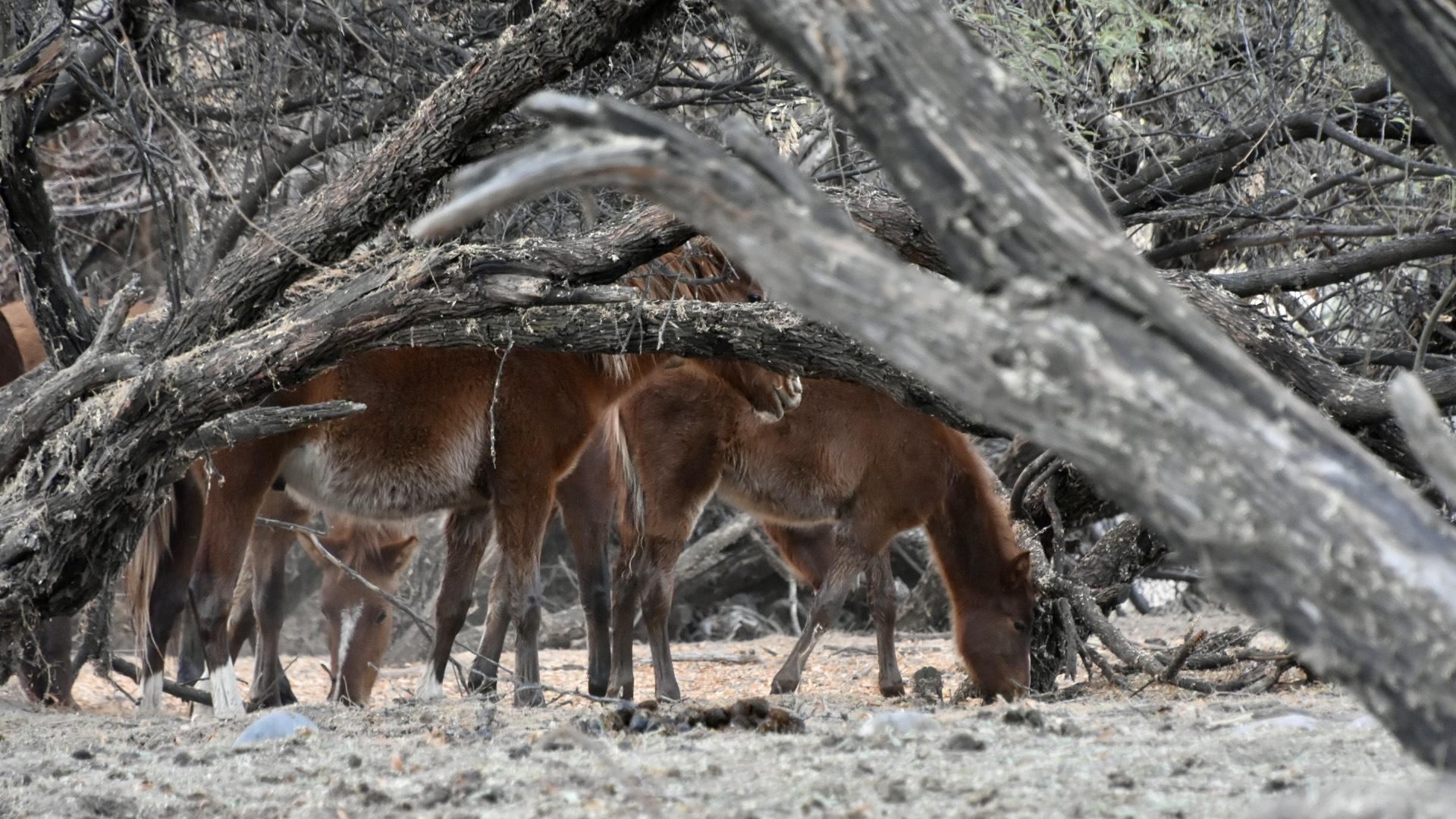 Road: Salt River Wild Horses