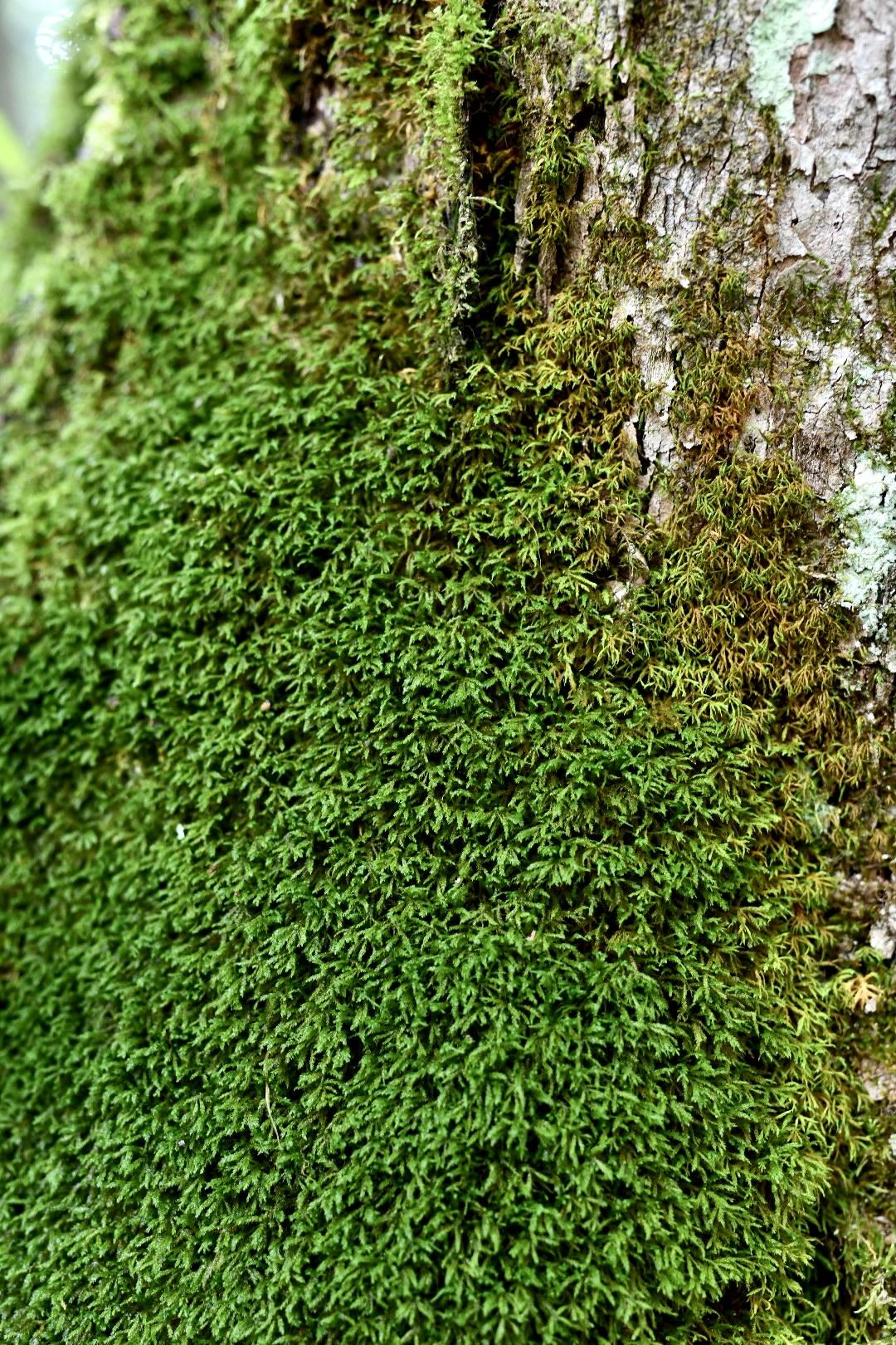 2021. Taryn Okesson. Digital Photography. Winona State Forest, New York.