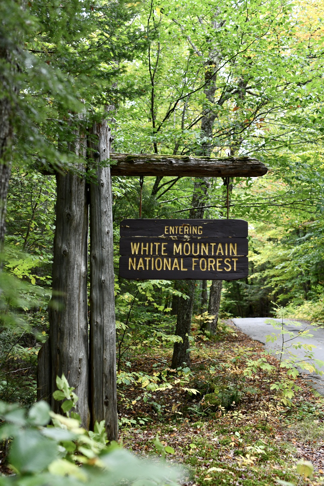 """Wood sign to the left of road. Sign in yellow relief reads """"entering White Mountain National Forest"""" 2021. Taryn Okesson. Digital Photography. White Mountain National Forest, New Hampshire."""
