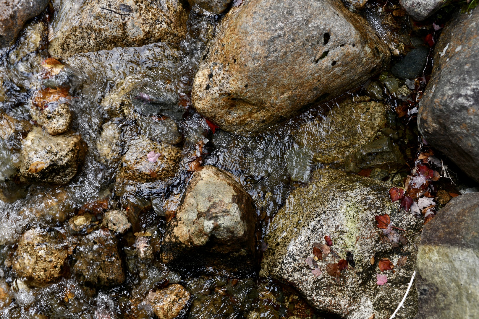A photograph of river rocks from directly above. 2021. Taryn Okesson. Digital Photography. White Mountain National Forest, New Hampshire.