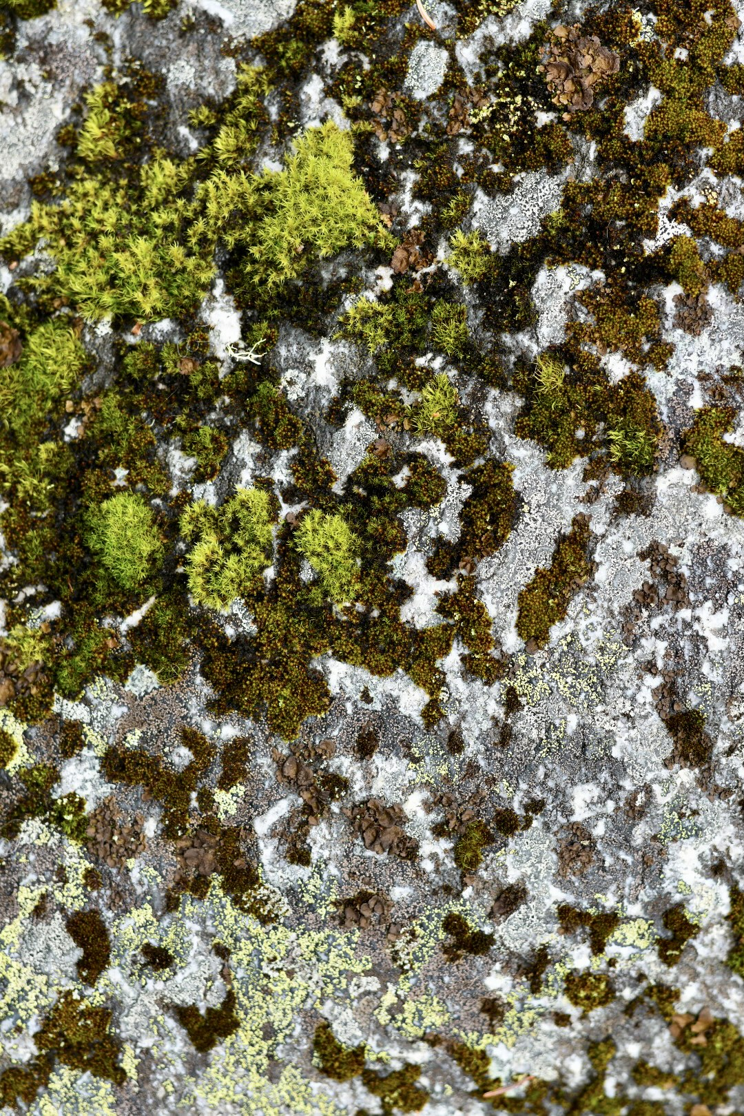 Close up of a river rock texture with spots of green moss. 2021. Taryn Okesson. Digital Photography. White Mountain National Forest, New Hampshire.