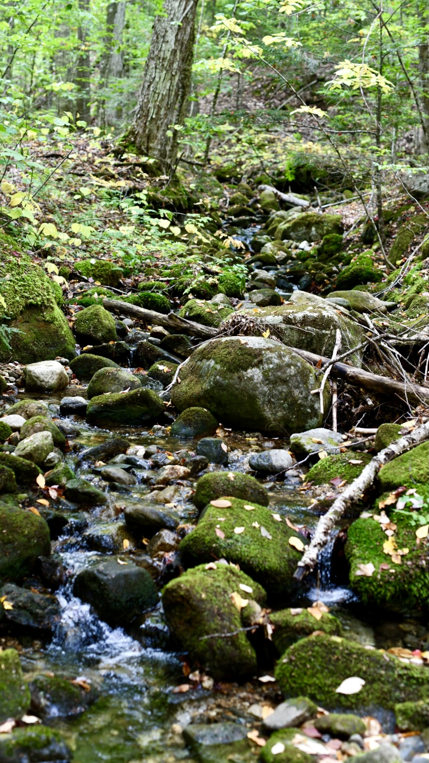 Mossy rocks in a woodland stream. 2021. Taryn Okesson. Digital Photography. White Mountain National Forest, New Hampshire.