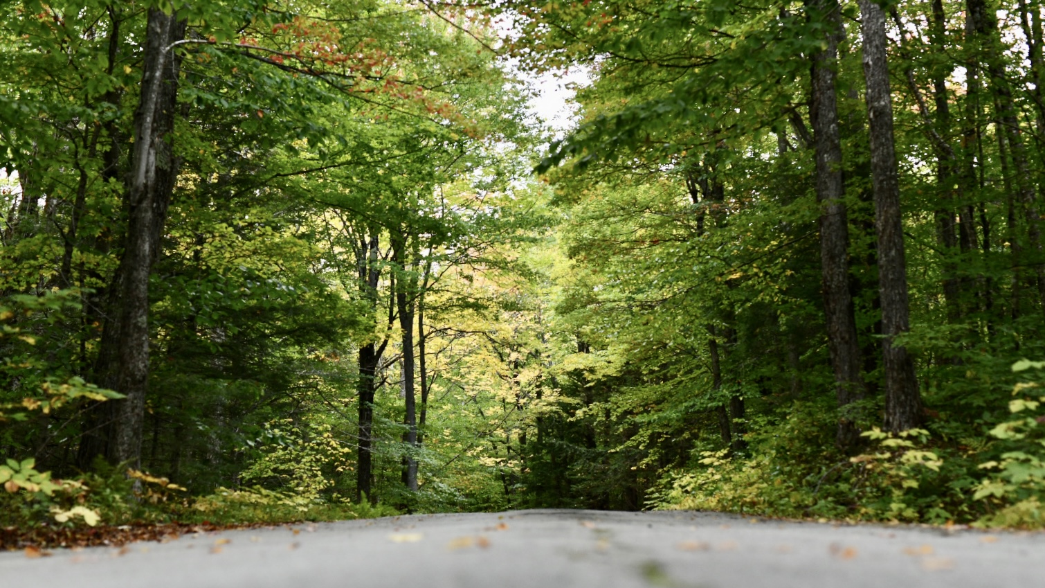 Photograph from low perspective of a woodland road. 2021. Taryn Okesson. Digital Photography. White Mountain National Forest, New Hampshire.