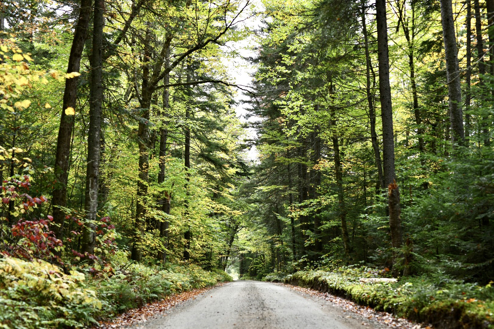 Center of image is a dirt road going through a deciduous forest, some leaves are just beginning to turn color. 2021. Taryn Okesson. Digital Photography. White Mountain National Forest, New Hampshire.
